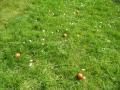 Cik olas pļavā vari saskaitīt?