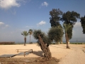 Pie Galilejas jūras